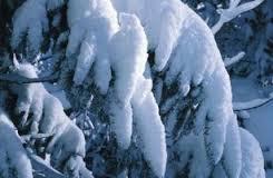 snowdroop
