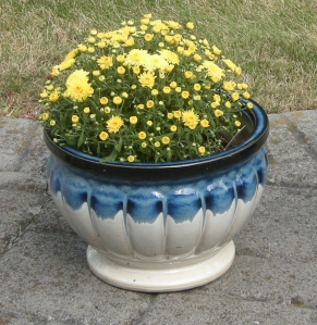 Pot of Mums